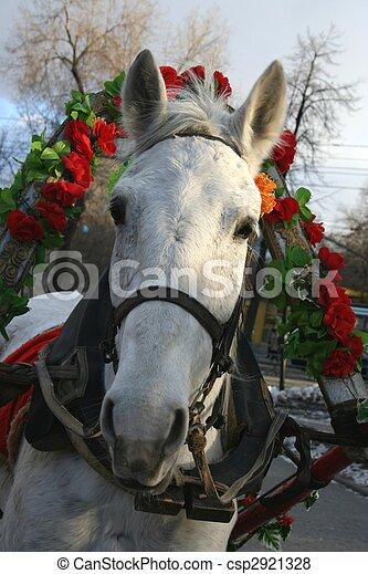 christmas horse csp2921328 - Christmas Horse