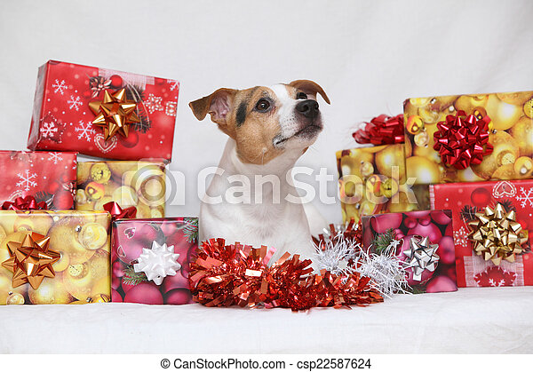 christmas jack russell terrier with gifts csp22587624 - Nice Christmas Gifts