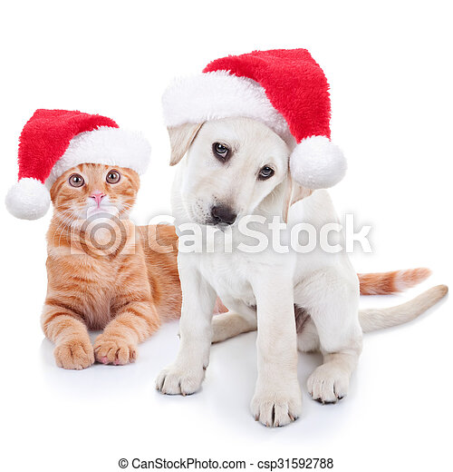 Cute Christmas Puppies.Christmas Pets Dog And Cat