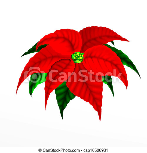 christmas poinsettia flower closeup isolated on white drawings rh canstockphoto com Christmas Bells Clip Art Christmas Ornament Clip Art