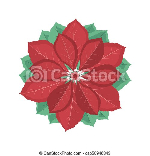 Christmas poinsettia flower vector illustration decorative christmas poinsettia flower csp50948343 mightylinksfo