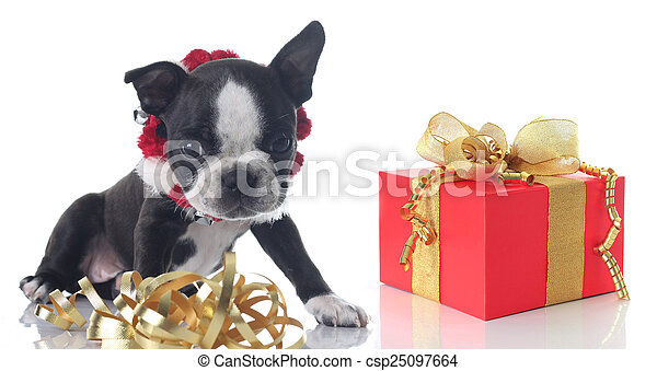 Christmas puppy - csp25097664