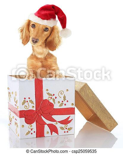 Christmas puppy - csp25059535