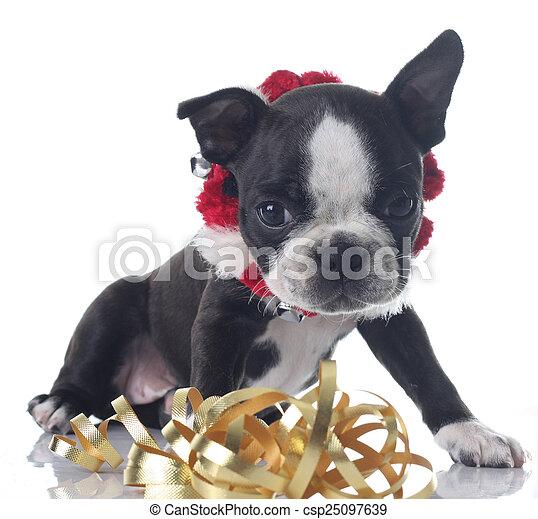 Christmas puppy - csp25097639