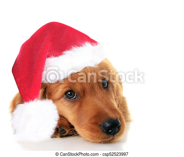 Christmas Santa puppy - csp52523997