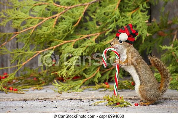 Christmas squirrel. - csp16994660