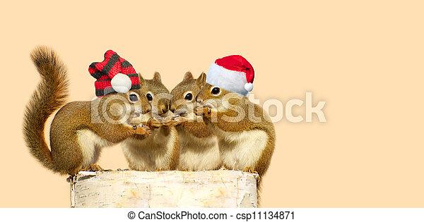 Christmas squirrels. - csp11134871