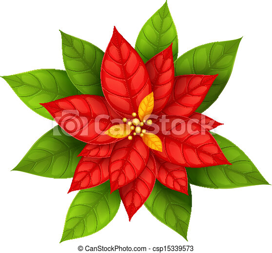 christmas star flower poinsettia isolated csp15339573 - Red Christmas Flowers