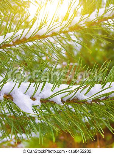 Christmas tree - csp8452282