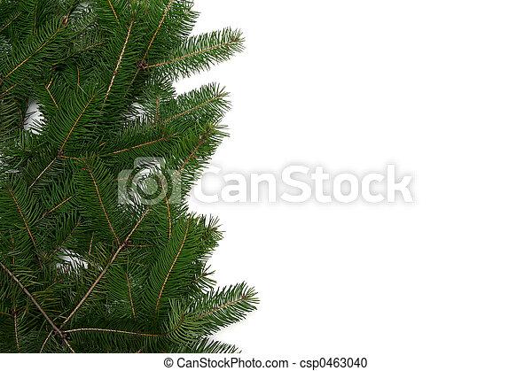 Christmas tree frame. Christmas tree twigs on a white backgrouns.