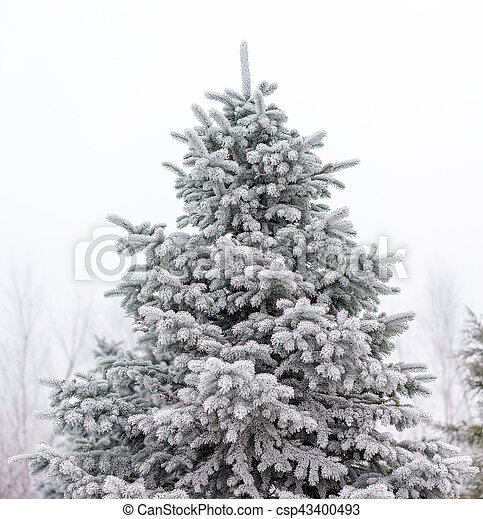 Christmas tree in the snow. - csp43400493