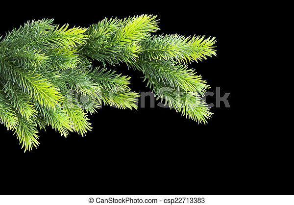 Christmas tree isolated on the black background - csp22713383