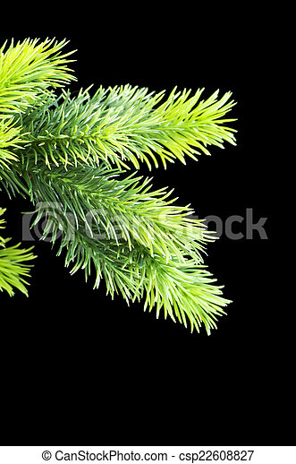 Christmas tree isolated on the black background - csp22608827