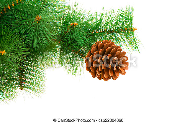 Christmas tree isolated on the white background - csp22804868
