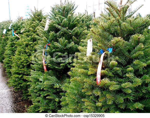 christmas tree lot csp15329905