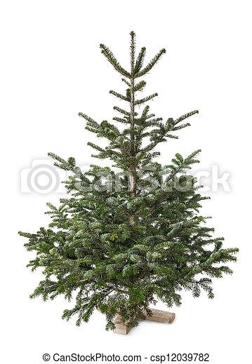 Christmas tree - csp12039782