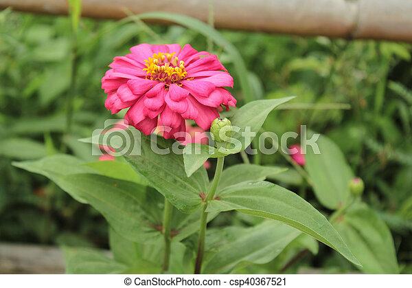 Außergewöhnlich Chrysanthemum indicum linn. @RB_03