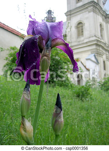 church and flower - csp0001356
