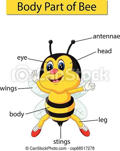 ciało, diagram, pokaz, część, pszczoła - csp68517278
