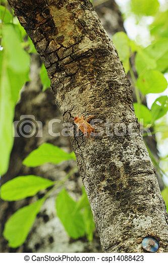 Cicada on a tree. - csp14088423