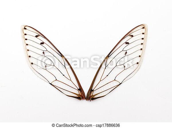 cicada wings. - csp17886636