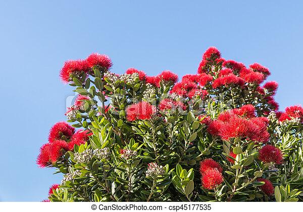 ciel bleu, arbre, contre, pohutukawa, fleurs, fleur - csp45177535