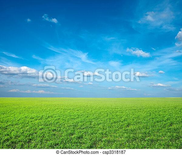 ciel bleu, champ, vert, sous, frais, herbe - csp3318187