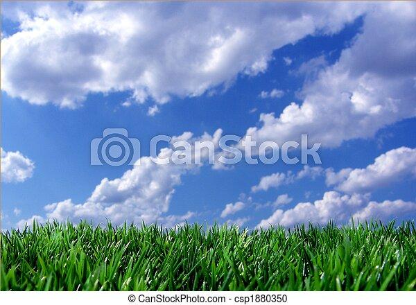 ciel bleu, herbe, vert - csp1880350