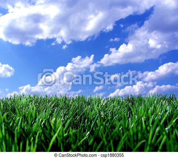 ciel bleu, herbe, vert - csp1880355
