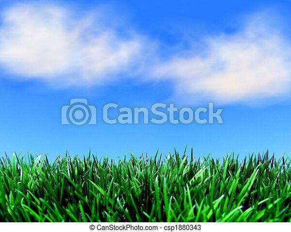 ciel bleu, herbe, vert - csp1880343