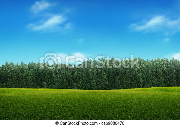ciel bleu, jeune, paysage, forêt verte - csp9080470
