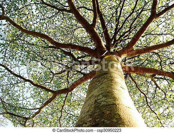 cielo, albero, fondo - csp30950223
