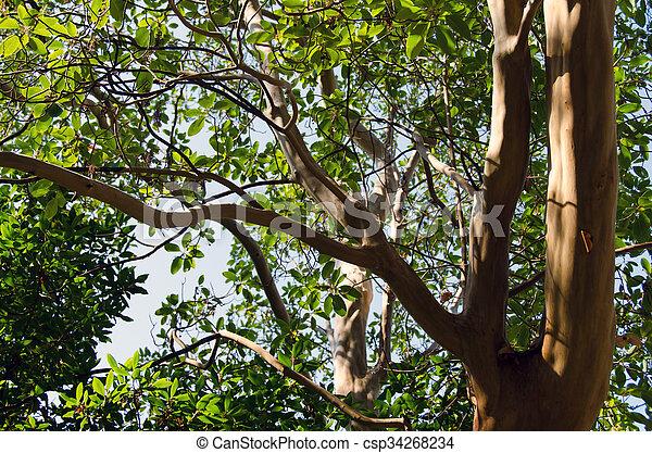 cielo, albero, fondo - csp34268234