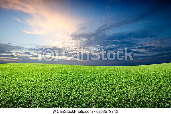 Campo de verde hierba fresca bajo el cielo azul - csp3579742