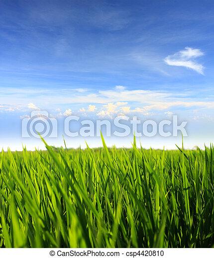 Hierba verde y cielo azul - csp4420810