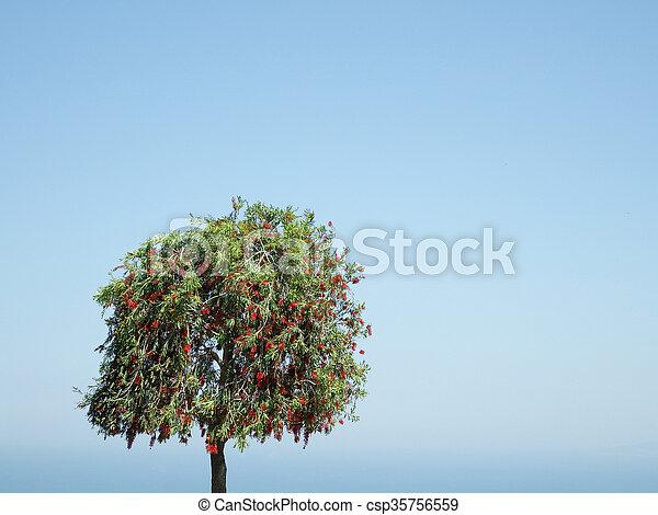 cielo, solitario, albero, fondo - csp35756559