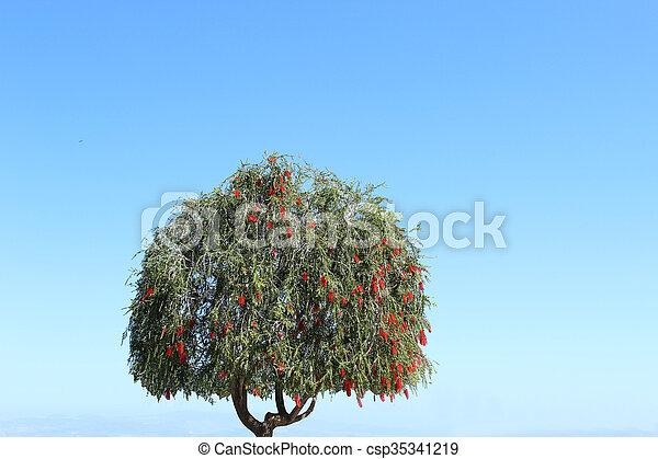 cielo, solitario, albero, fondo - csp35341219