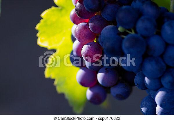 ciemny, jarzący się, winogrona, wino - csp0176822