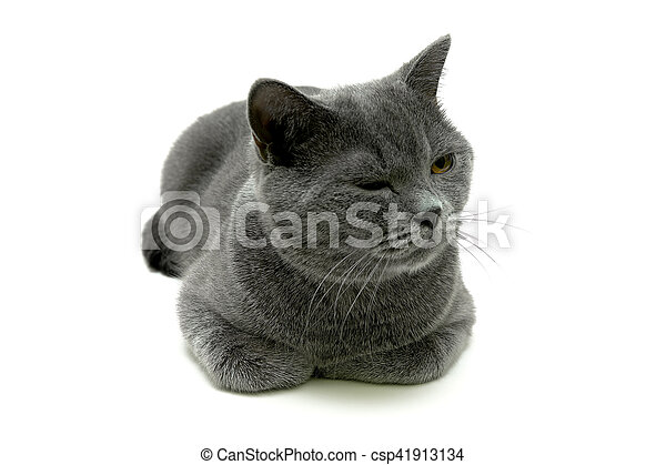 Gato cerca de un fondo blanco - csp41913134