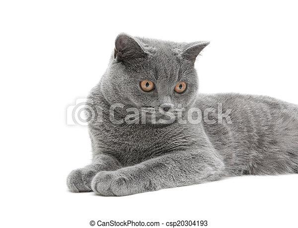 Gato cerca de fondo blanco - csp20304193