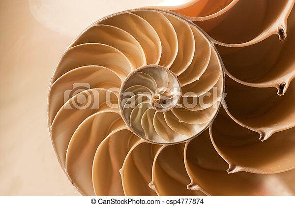 Cierra el patrón de proyectiles de Nautilus - csp4777874