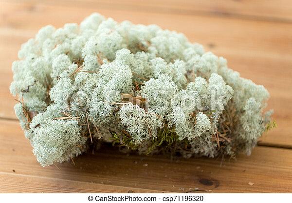 Cerca de liquen moss - csp71196320