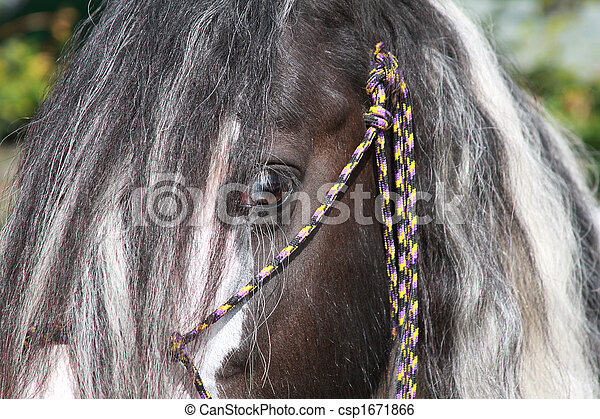 cigana, cavalo - csp1671866
