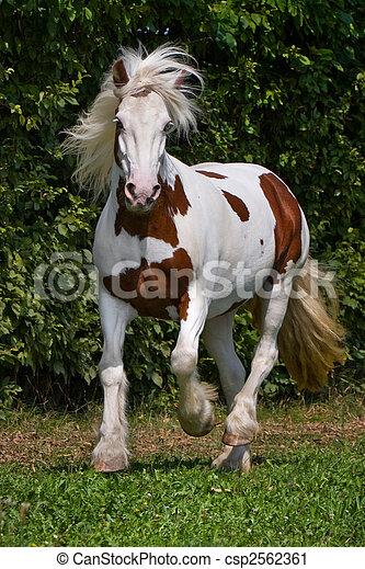 cigana, cavalo - csp2562361