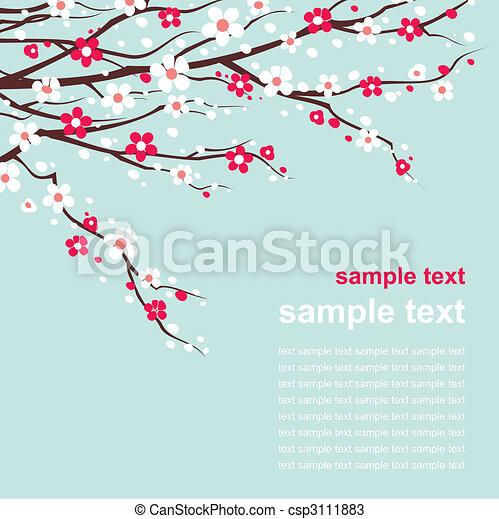 ciliegia, ramoscelli, fiore, scheda - csp3111883