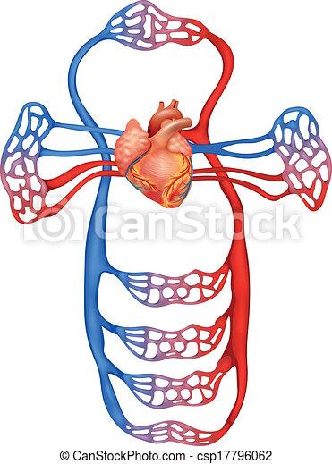 Circulatory system - csp17796062