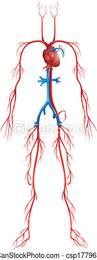 illustration of isolated human circulatory system clip art vector rh canstockphoto com Circulatory System Diagram Labeled circulatory system clipart pictures