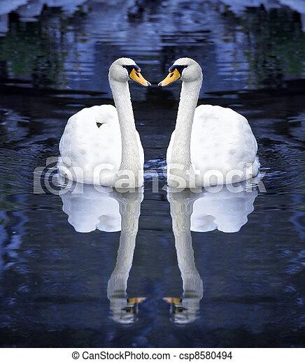 cisne branco, dois - csp8580494