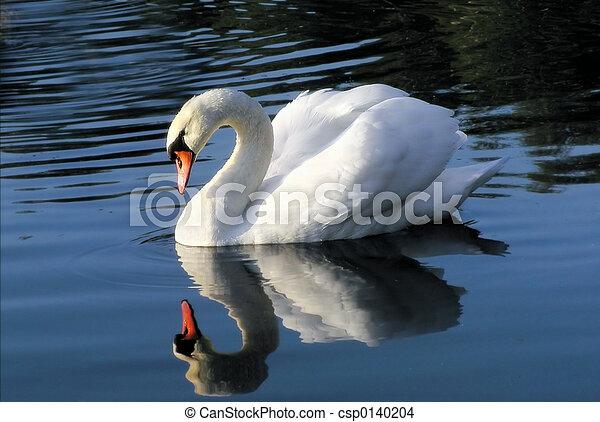 Cisne en el espejo - csp0140204
