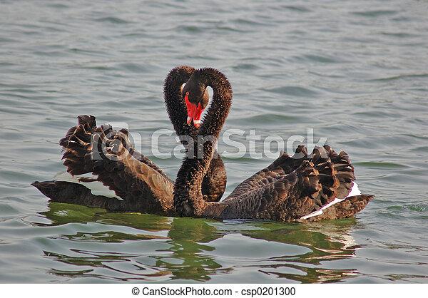Cisne familiar - csp0201300
